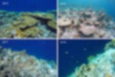 Šnorchlování, Dhiggaa, Vaavu atol, Maledivy