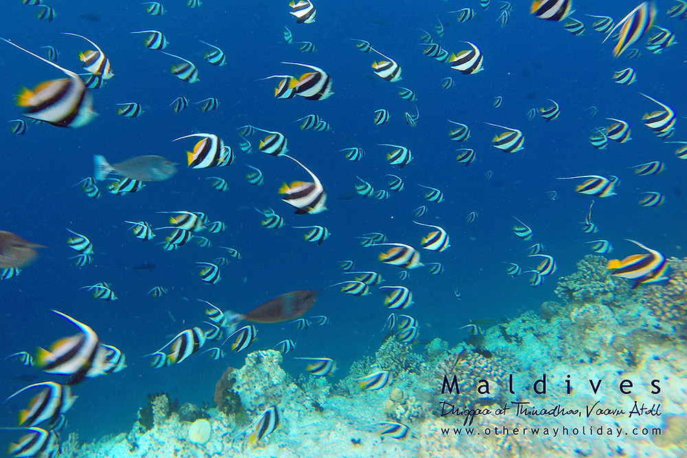 Dhigga, Thinadhoo, Vaavu atol, Maledivy
