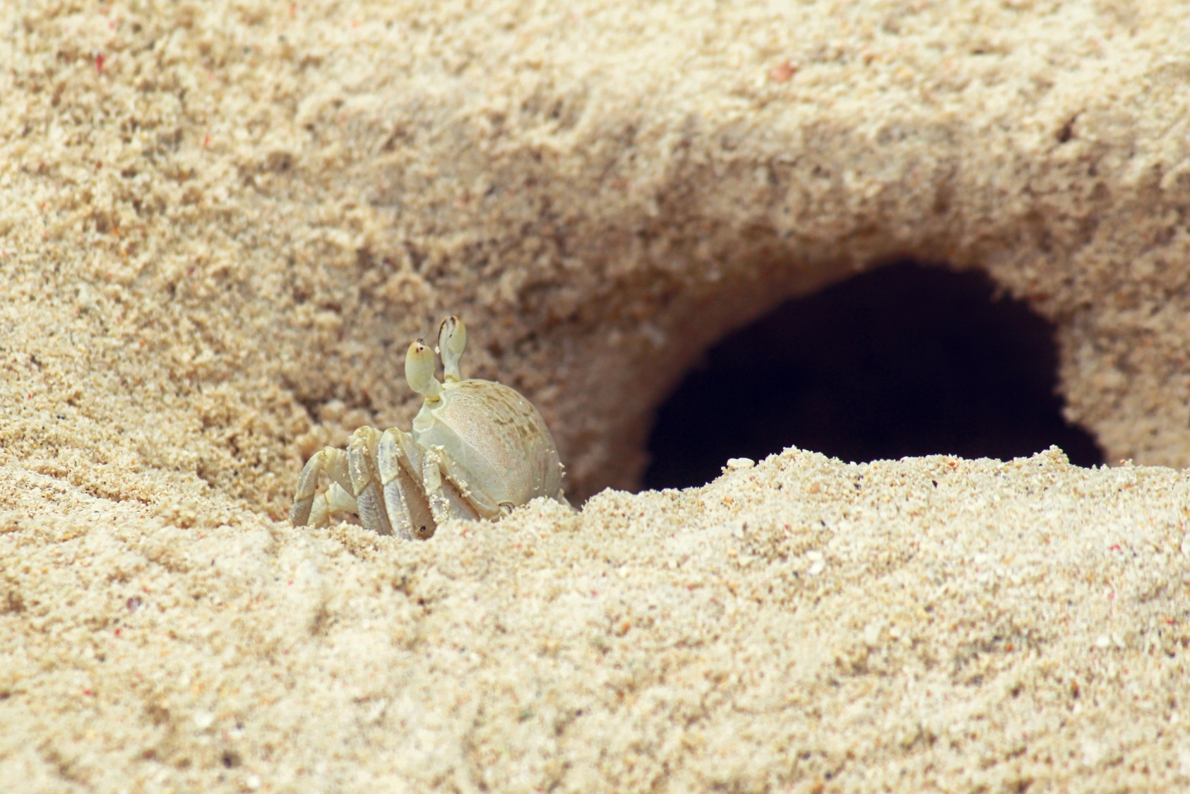 Flickr - Mr.jpg Crab - Home Sweet Home.jpg.jpg.jpg
