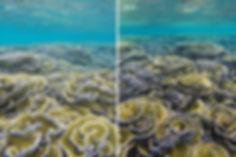 Šnorchlování, Goidhoo atol, Maledivy