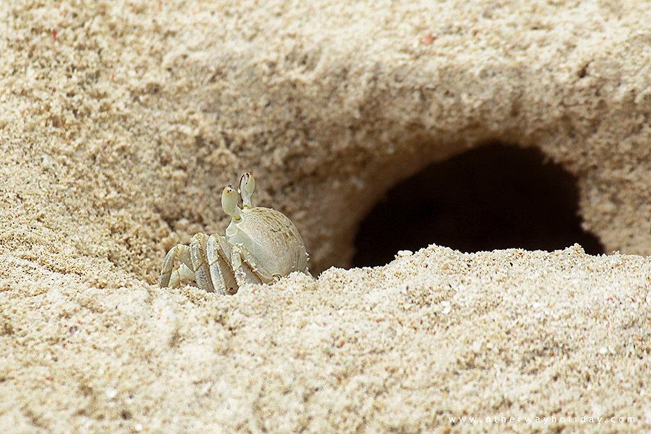 Ubytování na pláži, Maledivy