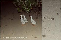 Flickr - Night Life on the Beach