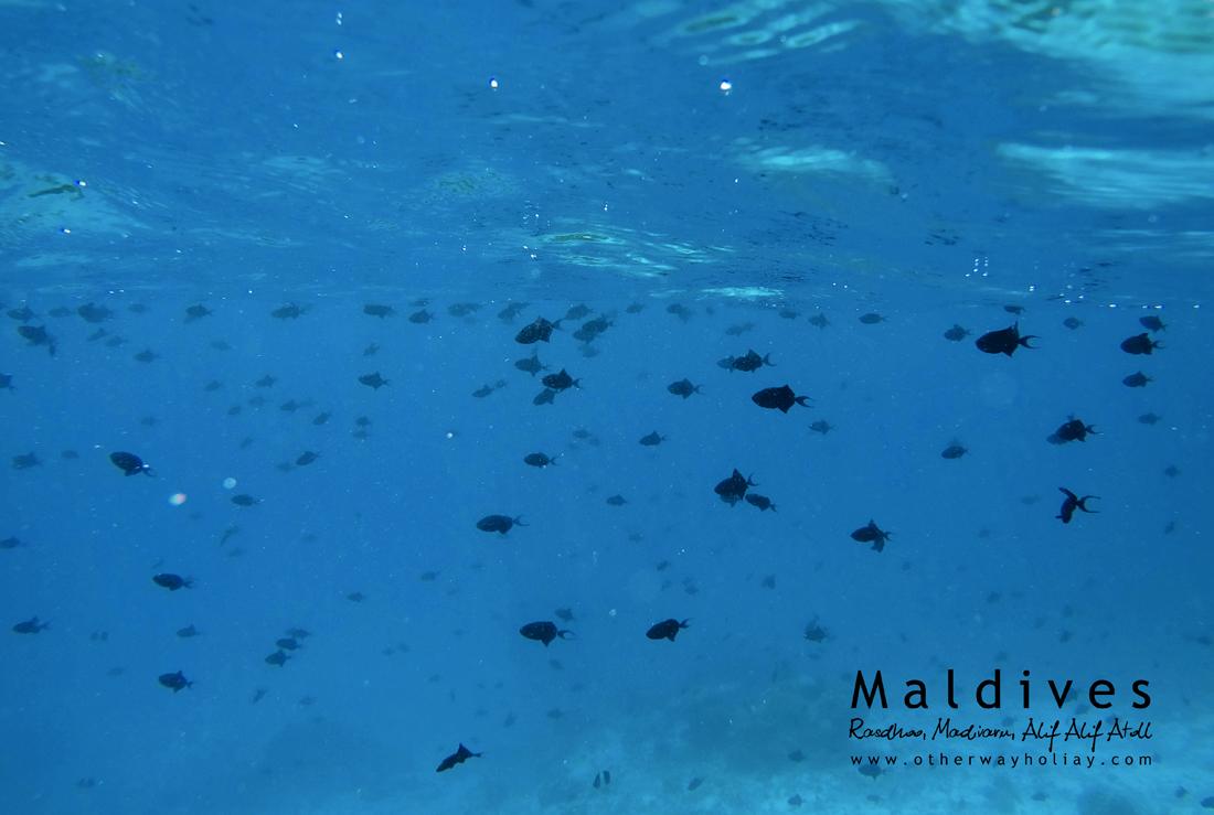 Rasdhoo, Madivaru, Alif Alif Atoll, Maldives