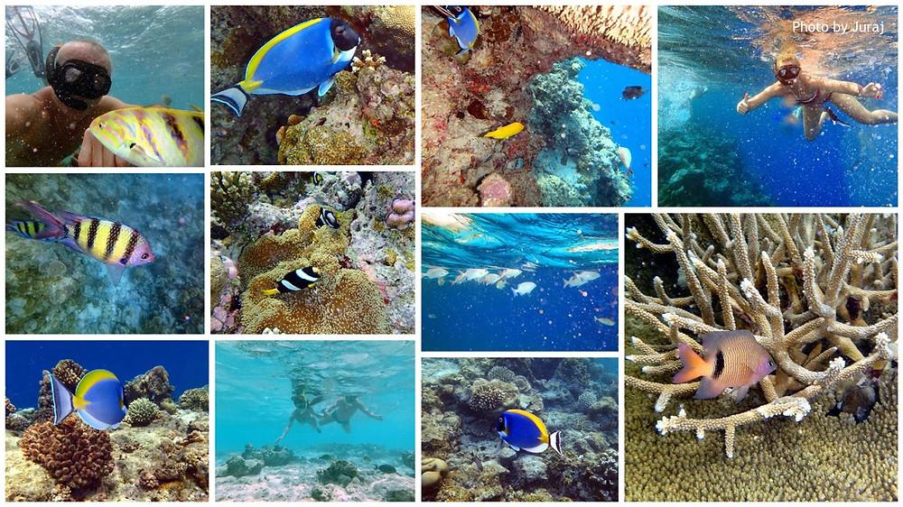 Šnorchlování, Maledivy