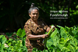 Flickr - Local woman reaps the harvest.jpg Delicacy called Ala (Taro).jpg