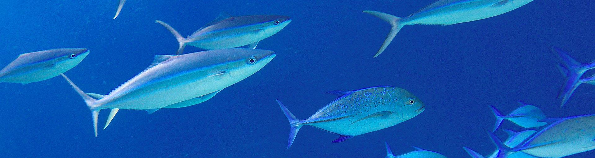 Kontakt na ryby z Malediv
