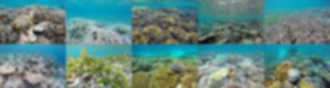 Bělení, úmrtí, růst korálů a mořská tráva na Maledivách