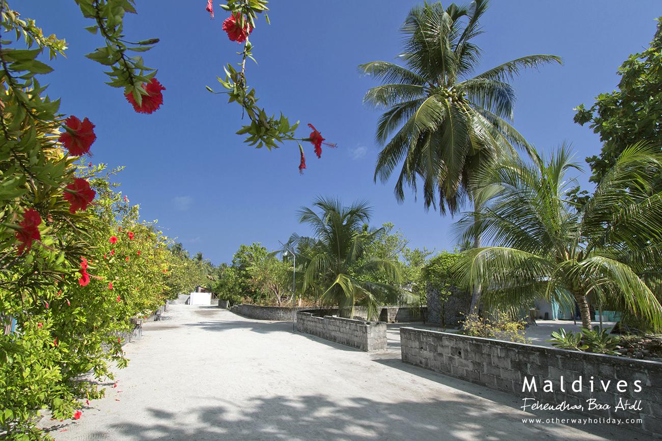 Fehendhoo, Baa Atoll, Maldives (4)