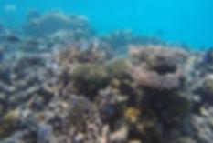 Dhoru Kandu, Goidhoo atol, Maledivy