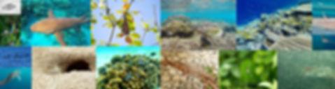Maledivy fauna