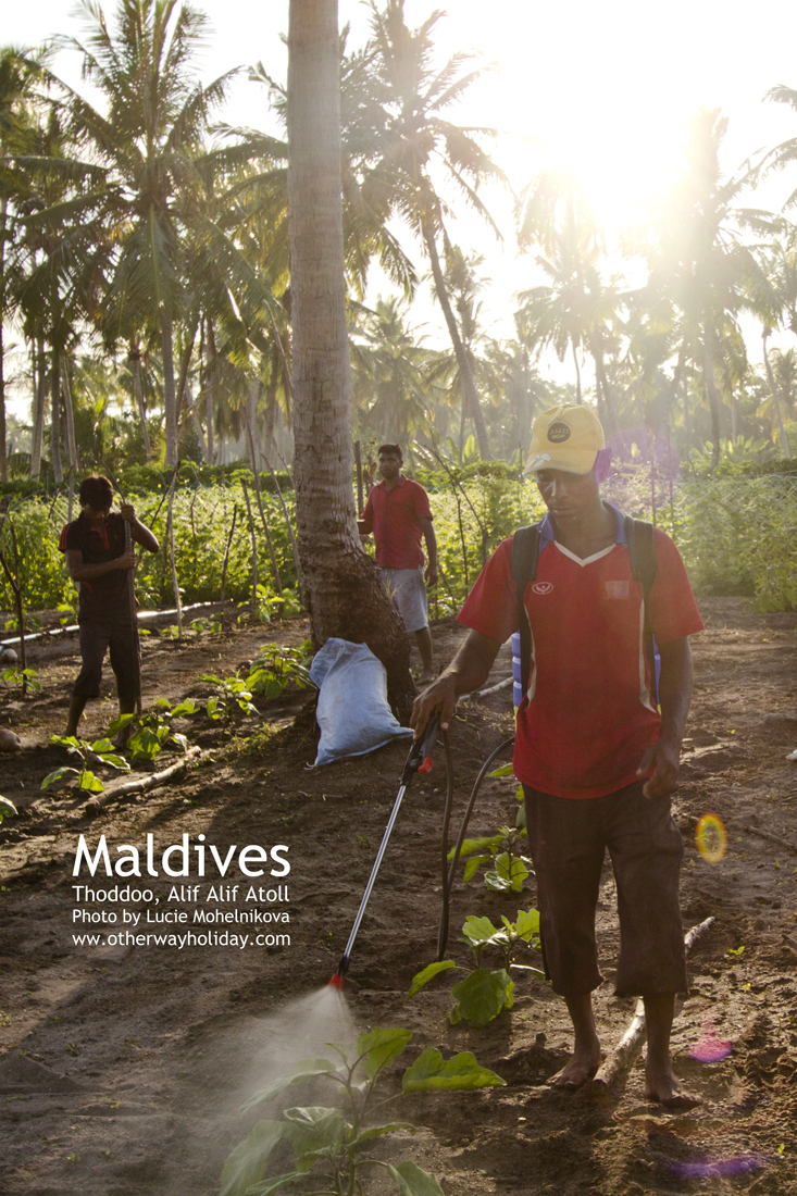 Farmáři na Thoddoo, Maledivy