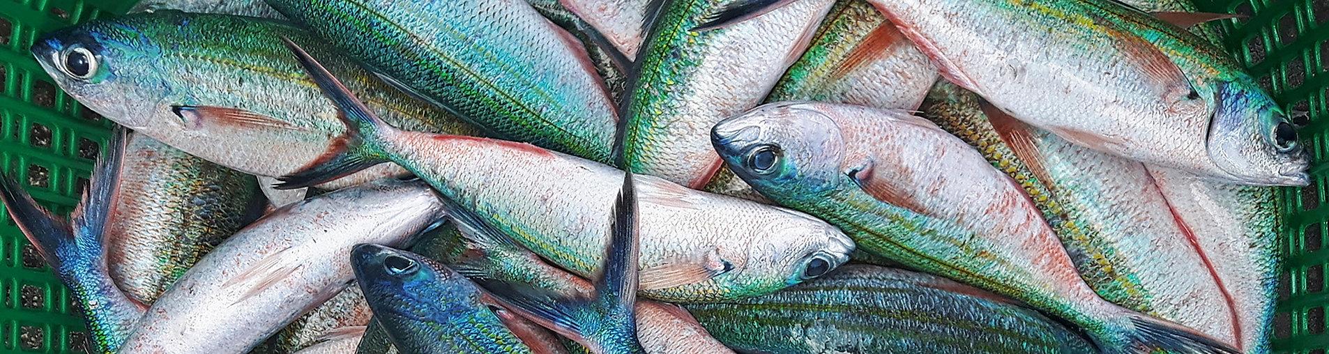 Rybyště, Rybí tržiště, trh s čerstvými rybami