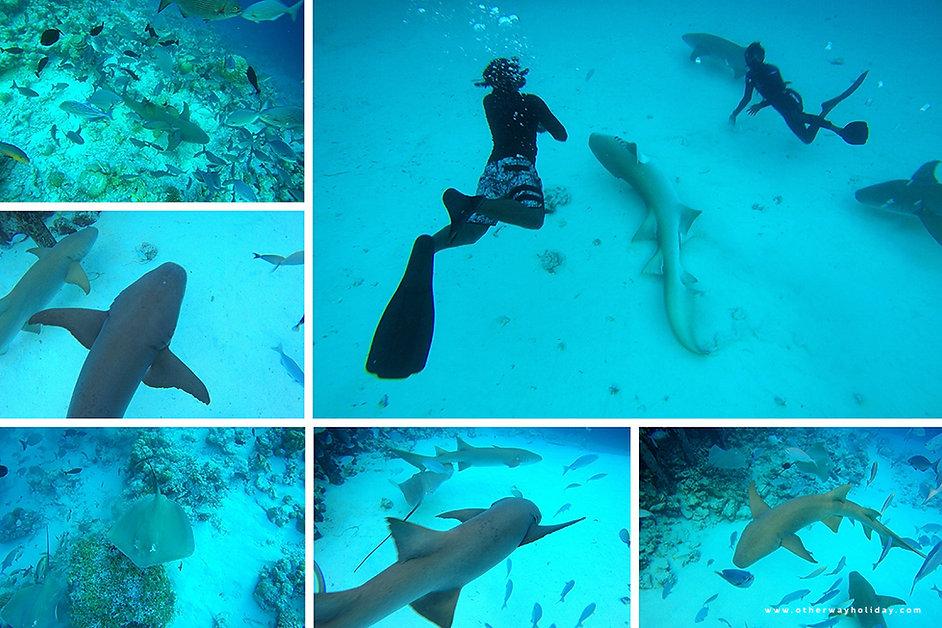 Šnorchlování se žraloky Nurse Sharks, Maledivy