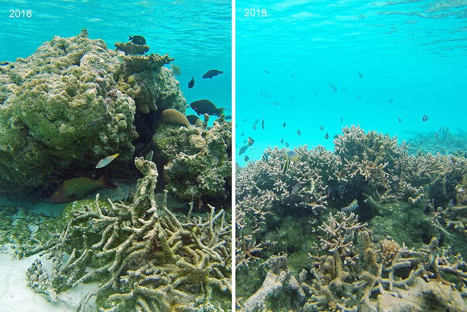 Šnorchlování, Fulhadhoo, Goidhoo atol, Malediv