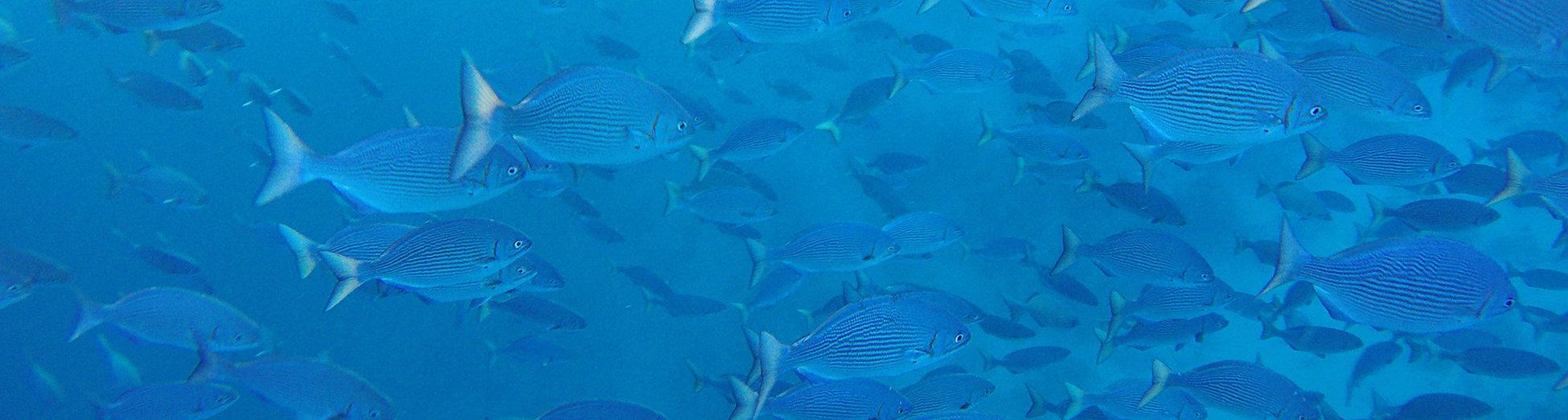Čerstvé ryby z Malediv