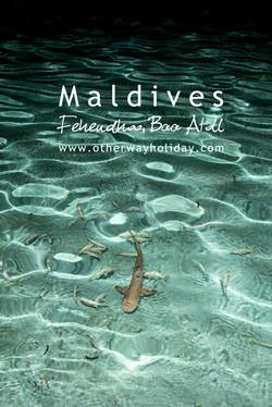 Fehendhoo, Baa atol, Maledivy