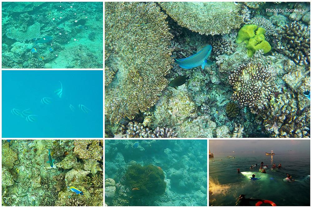 Šnorchlování, Alimantha, Maledivy