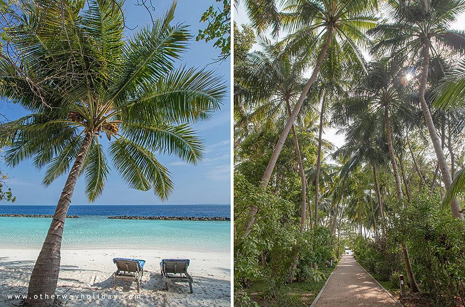 Royal Island Resort & Spa, Baa atol, Maledivy (10).jp