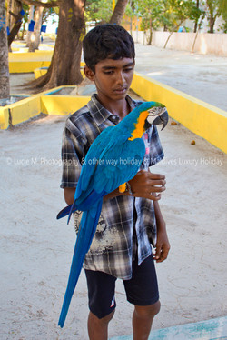 Flickr - Maldivian guy and Macaw