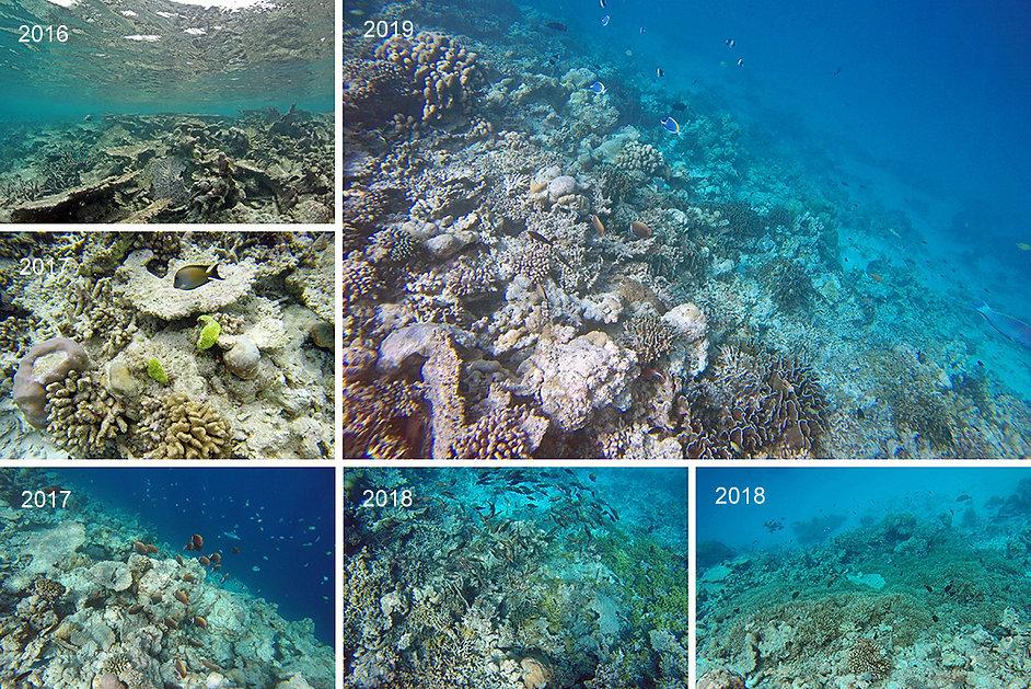 Šnorchlování, Thinadhoo, Vaavu atol, Maledivy
