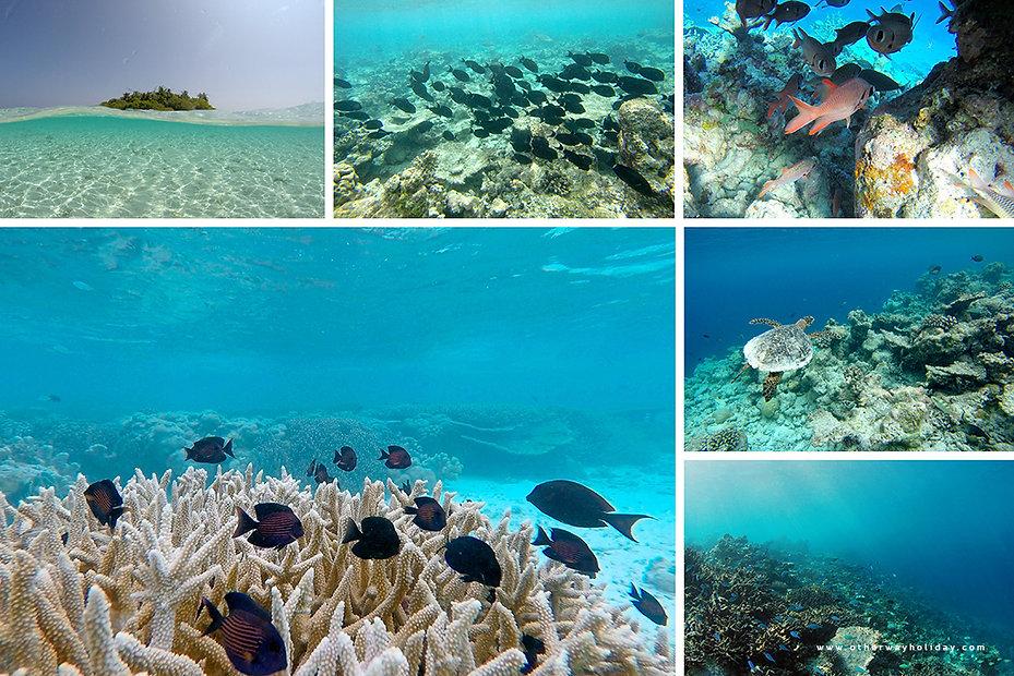Šnorchlování na korálovém útesu Maledivy