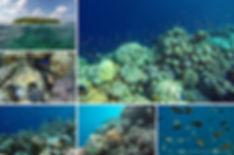 Korálový útes na Fodhdhoo, Noonu atol, M