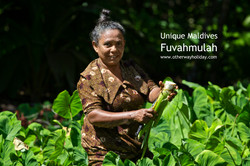 Local woman reaps the harvest.jpg Delicacy called Ala (Taro)