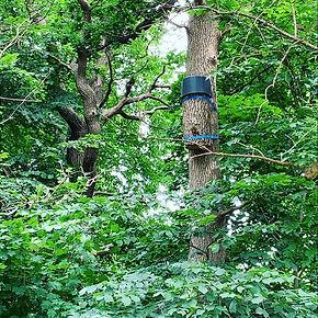 Honey Bee Rewilding in Sweden