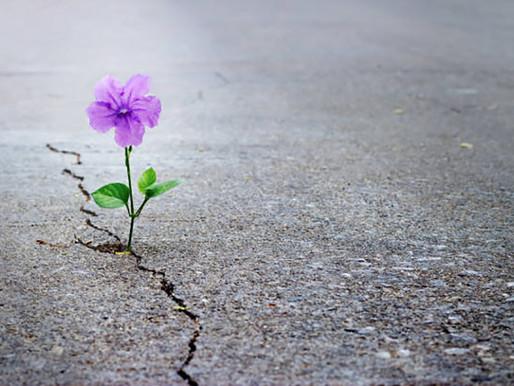 Esperança no isolamento
