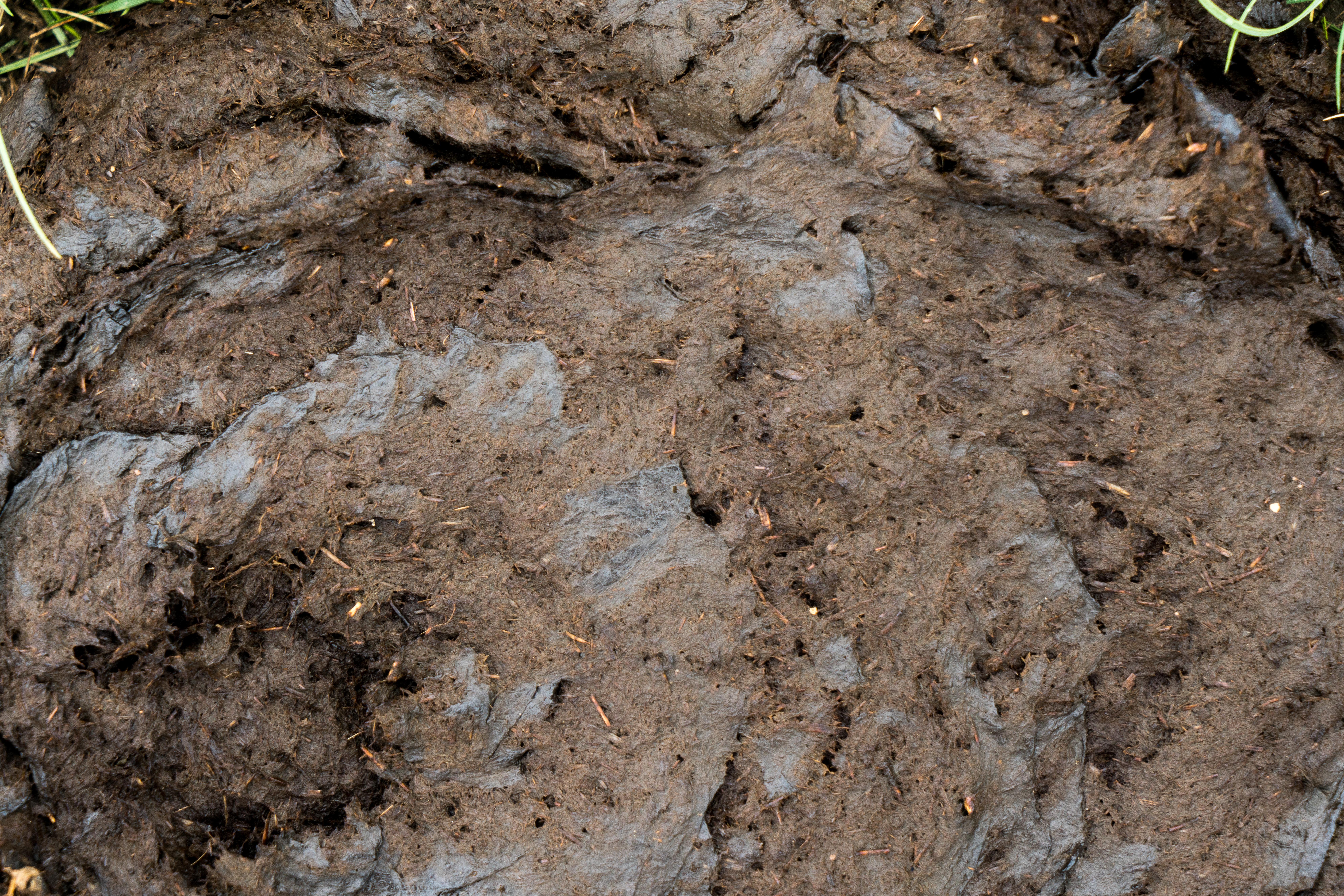 Dirt-Dung-11
