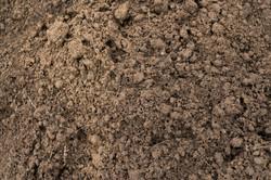 Dirt-Dung-16