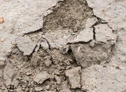 Dirt-Dung-3