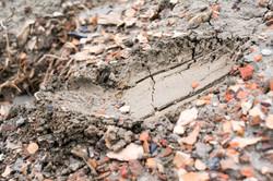 Dirt-Dung-12