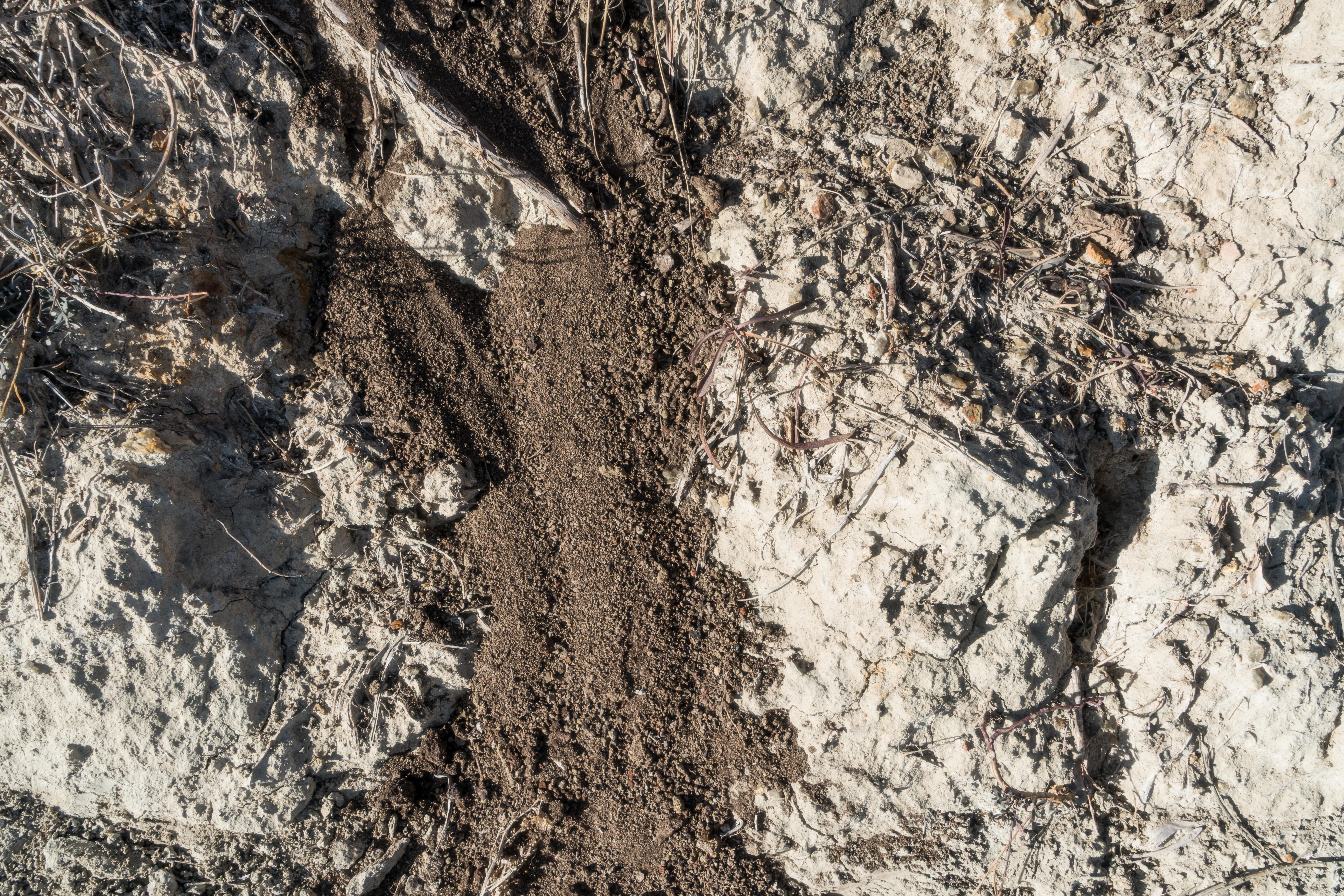 Dirt-Dung-15