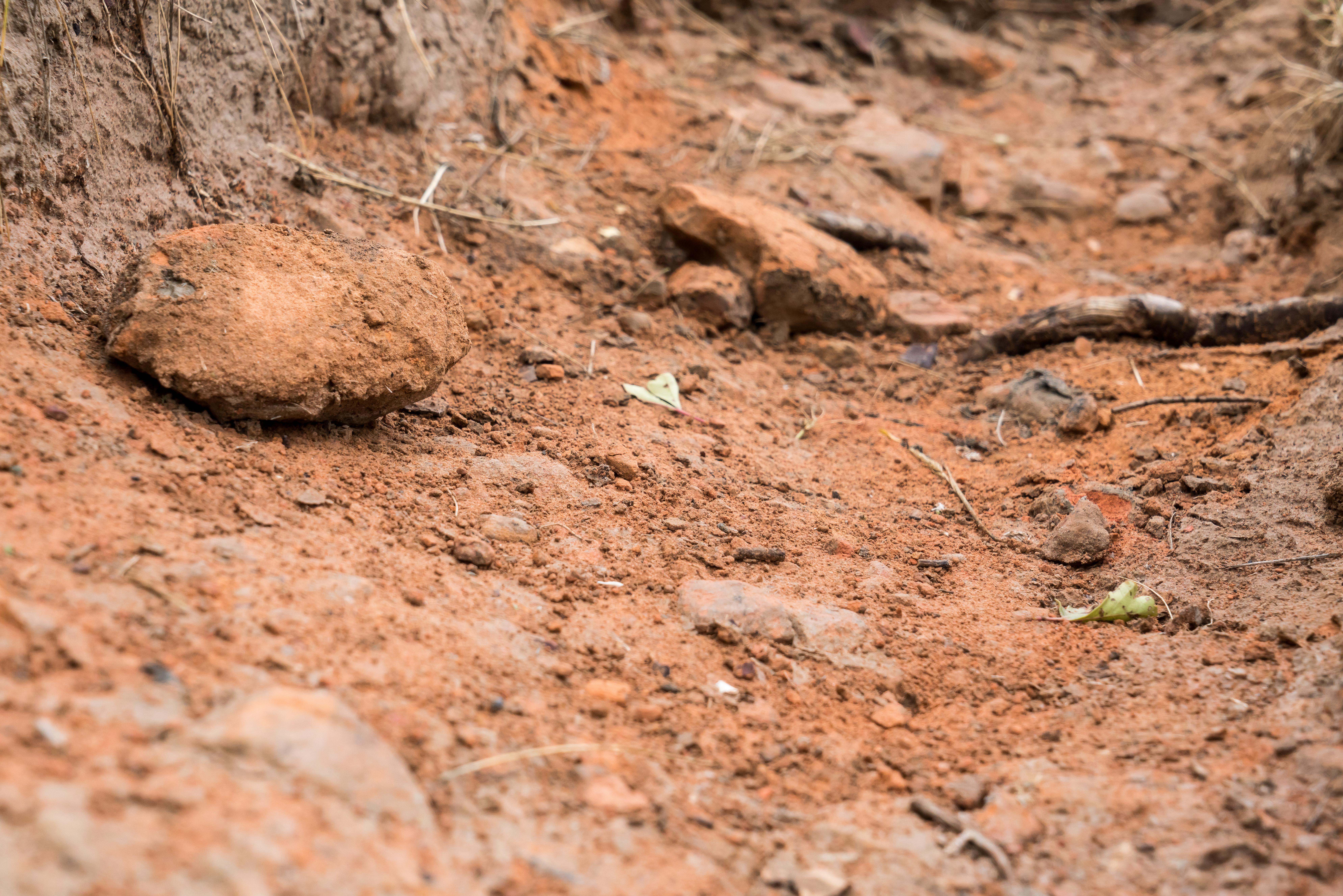 Dirt-Dung-8