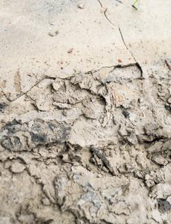 Dirt-Dung-4