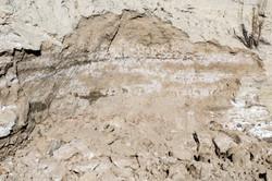 Dirt-Dung-19