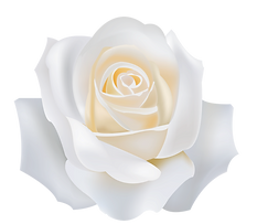 —Pngtree—white roses_2780388.png