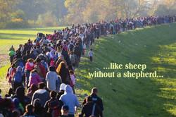 1 A SHEEP W OUT SHEPHERD