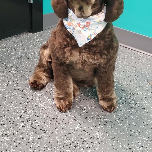 Dog Grooming Customer