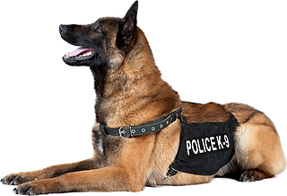 Police-Dog-with-Police-K-9-Vest.png
