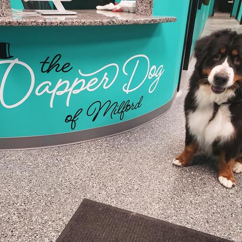 The Dapper Dog of Milford Lobby