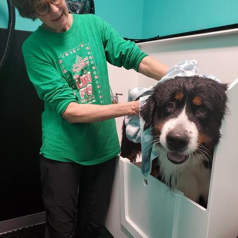 Self-Serve Dog Wash