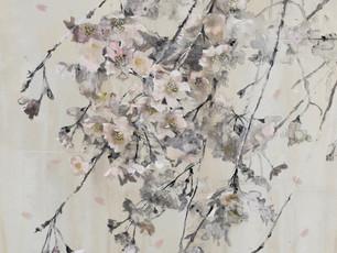 枝垂桜 Weeping cherry tree