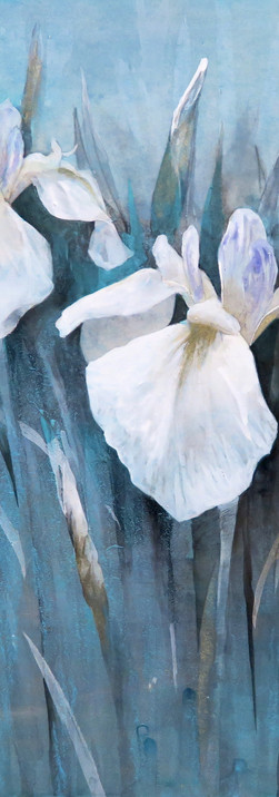 花菖蒲 iris