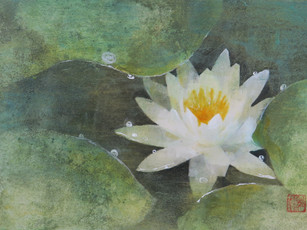 水蓮 Water lily