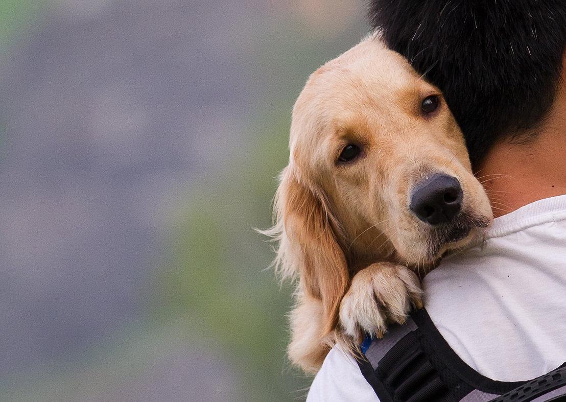 Dog on a man shoulders.jpg