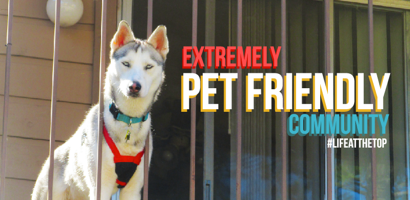 We Love Our Furry Friends!