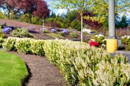 landscaping-close-up.jpg