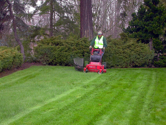 Landscaping lawn maintence worker mowing grass.